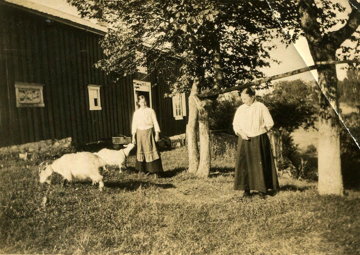 Maria og Ragna i hagen med to geiter: